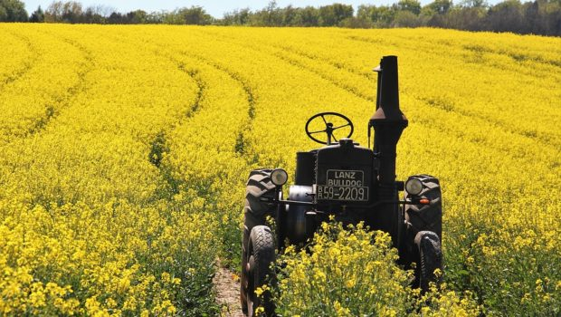 field-of-rapeseeds-1382772_960_720