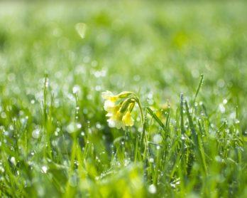 Spring image generic